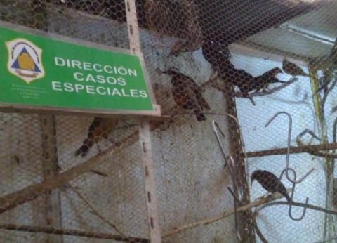 Intento volar, pero no llevo alas: cuatro detenidos por intentar comercializar animales en extinción en Bahía Blanca