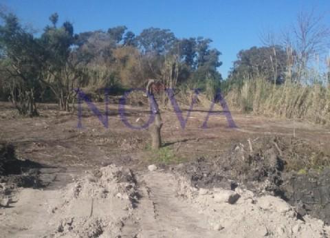 Indignación de vecinos de Berisso por la venta de terrenos fiscales que funcionaban como reserva natural