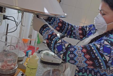 Castelli: se realizan análisis gratuitos de triquinosis en bromatología municipal