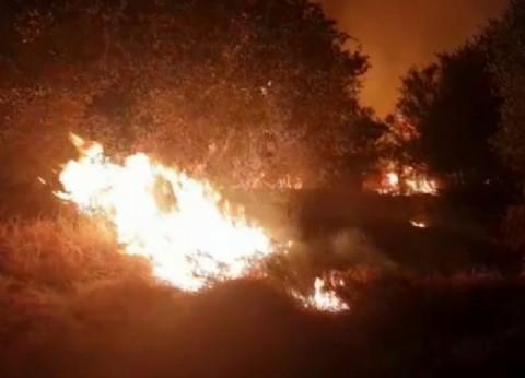 ¿Otro atentando a Olmedo?: en pleno invierno, se incendió una plantación de olivo del precandidato salteño en La Rioja